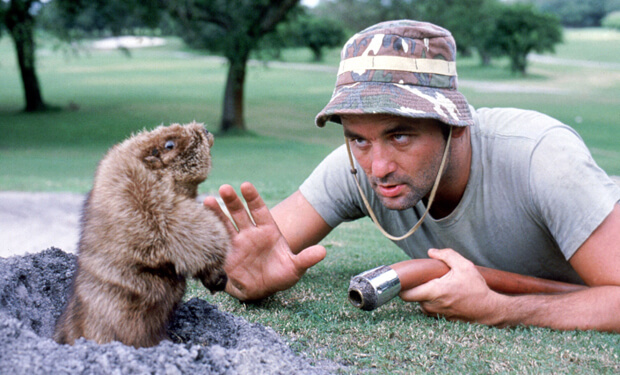 caddyshack gopher and Bill Murray
